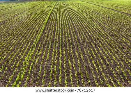 freshly plowed field in beautiful light Stock photo © meinzahn