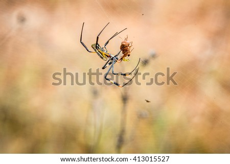 Female Golden orb spider in a web in the Selati Game Reserve. Stock photo © simoneeman