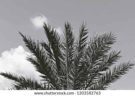 Black pine in the Paphos forest in Cyprus Stock photo © Mps197