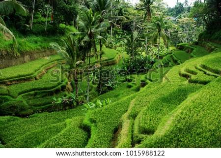 Gyönyörű rizs vulkáni Bali fű tájkép Stock fotó © galitskaya