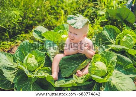 Baby · Sitzung · Kohl · Kinder · Kind · Blatt - stock foto © galitskaya