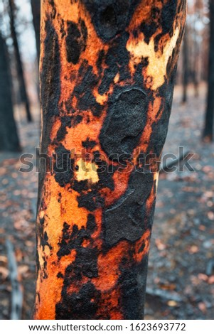 Tree with charred burnt patterns on its trunk after bushfires Stock photo © lovleah