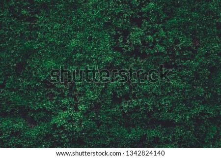 dark green moss wall stock photo © olira