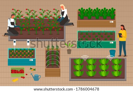 Man growing strawberries and tomatoes in wooden boxes, agricultural occupation, grower with box Stock photo © robuart