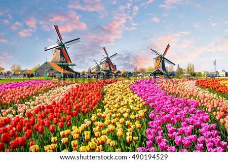 Holland coucher du soleil Pays-Bas rural célèbre touristiques Photo stock © dmitry_rukhlenko