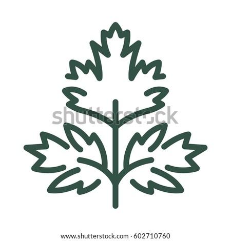 Zöld petrezselyem ikon természetes organikus növényzet Stock fotó © robuart