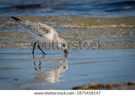 Olhando comida costa água natureza pássaro Foto stock © chris2766