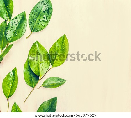 Fresh parsley leaves on wooden background. Stock photo © masay256