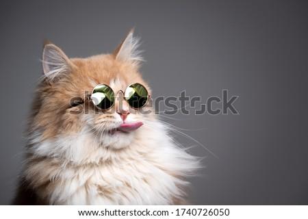 Studio shot of an adorable cat Stock photo © vauvau