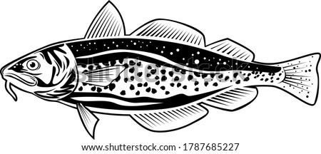 Atlantic Cod Gadus Morhua or Codling Side View Retro Style Black and White Stock photo © patrimonio