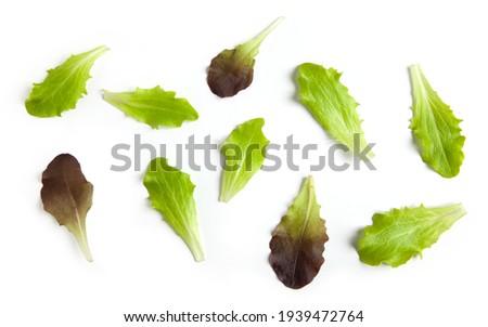 Salad - Red Lettuce Macro Stock photo © frannyanne