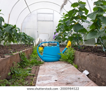 Old fashioned watering can standing in greenhouse Stock photo © vetdoctor
