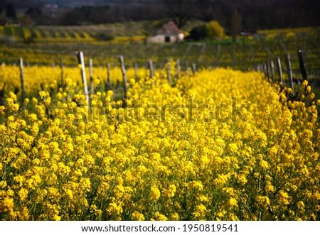 шампанского · вино · виноград · красивой · зеленый · пить - Сток-фото © meinzahn