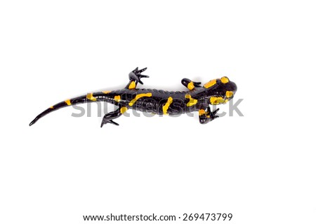 Orange spotted Salamander isolated on a white background. Cartoon vector close-up illustration. Stock photo © Lady-Luck