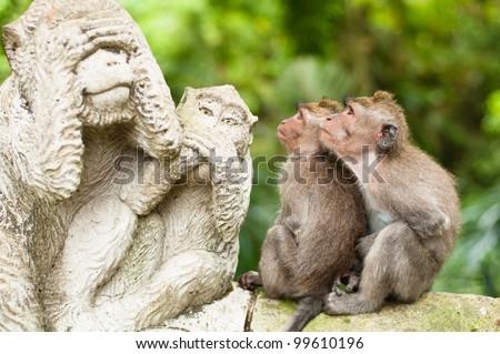 Sacré singe forêt Indonésie famille vert Photo stock © galitskaya