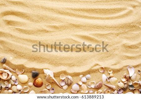 Makró lövés kagyló homok tengerpart gyönyörű Stock fotó © vapi