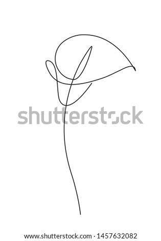 Lily flower. Continuous line art drawing. Vector logo illustration. Stock photo © ESSL