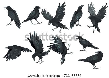 Common cartoon black hand signs on white Stock photo © evgeny89