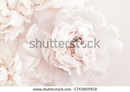 Pasztell virágok virágzik virágmintás művészet esküvő Stock fotó © Anneleven