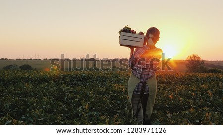 Woman and man farmers with harvest in boxes and baskets. Gardener workers with autumn garden stuff Stock photo © robuart