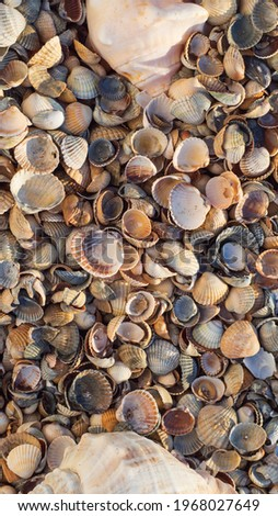 summer frame background with suns, shells and scallops in square Stock photo © marinini