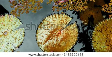 лист капли воды цветок воды природы Сток-фото © meinzahn