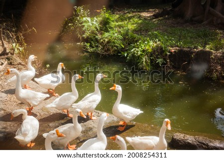 A window near the river with a goose Stock photo © bluering