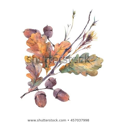 Vízfesték minta tölgy levelek ősz virágmintás Stock fotó © Artspace