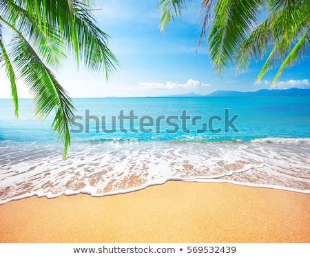 Stock fotó: Pálmafák · gyönyörű · naplemente · tengerpart · víz · fa