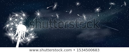 Dandelion universo espaço fofo brilhante estrelas Foto stock © liolle