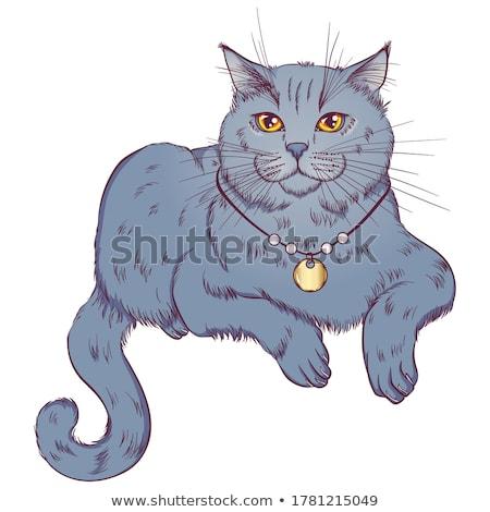 Droite chat isolé félin vecteur silhouette Photo stock © robuart