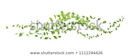 Repülés zöld levelek szett hullámok absztrakt természet Stock fotó © kostins