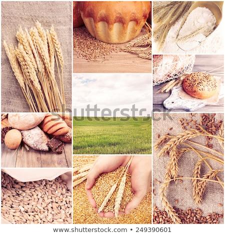 Verde trigo colagem coleção campo de trigo fotos Foto stock © ldambies