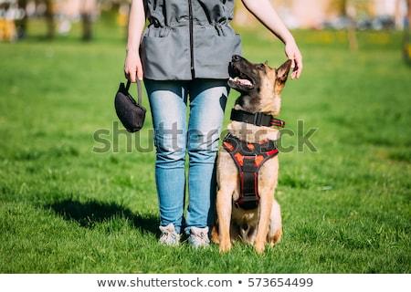 Engedelmes kutya felirat nem megengedett fókusz Stock fotó © Hofmeester