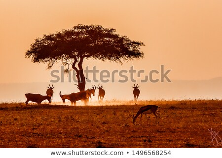 закат Ботсвана саванна трава природы Сток-фото © poco_bw