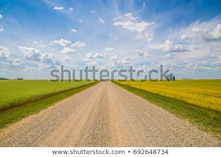 oude · weg · groen · gras · veld · stormachtig · hemel - stockfoto © simplefoto