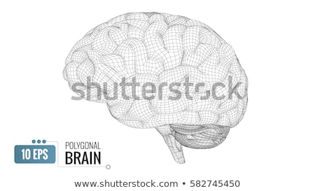 Wireframe hersenen hoog 3d illustration Stockfoto © DuToVision