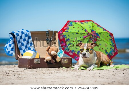 dog resting in suitcase stock photo © eriklam