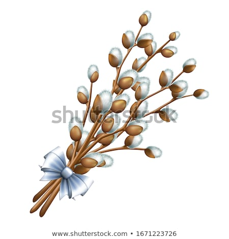 willow catkins stock photo © stocksnapper