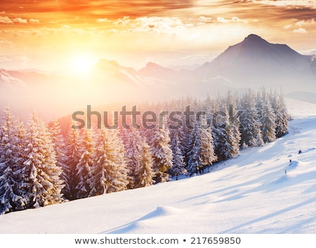 Collage of wintry landscapes Stock photo © photography33