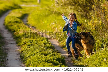 dangerous dogs and child stock photo © cynoclub