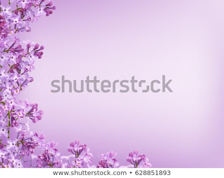 flores jardim primavera:Foto stock : Spring bokeh floral background with lilac flowers in the