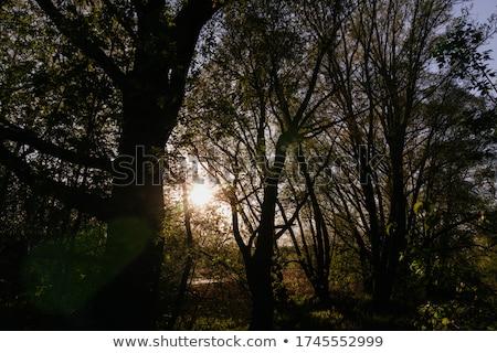 солнечный свет зеленый лиственный Nice цвета пейзаж Сток-фото © 3523studio