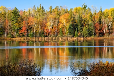 Autum forest reflection  Stock photo © 3523studio
