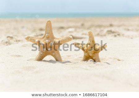grande · concha · starfish · praia · Havaí · água - foto stock © EllenSmile