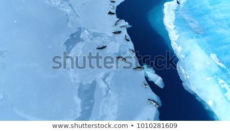 mavi · okyanus · deniz · kar · soğuk - stok fotoğraf © meinzahn