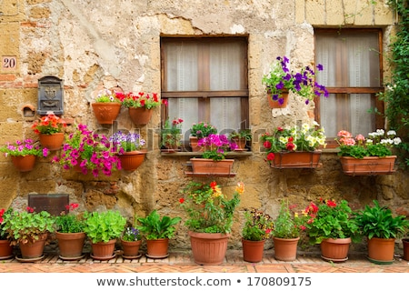 House with ivy and flowers in Italy Stock photo © artjazz