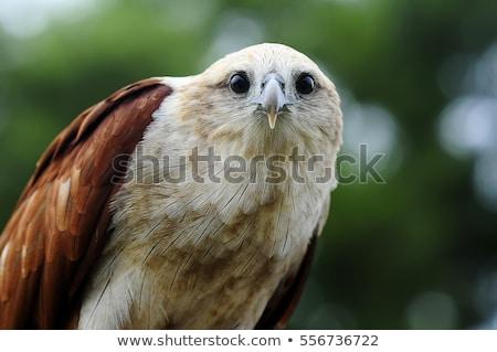 Stockfoto: Vis · adelaar · vogel · wachten · tijd · kleur