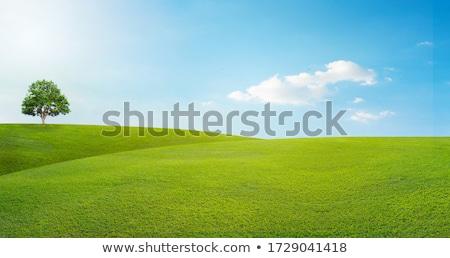 árvores grama verde colorido ilustração branco primavera Foto stock © Valeo5