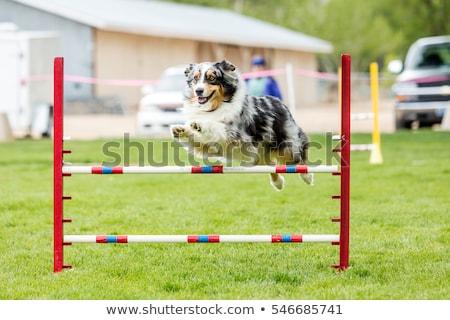 ágil cão ilustração menino Foto stock © lenm